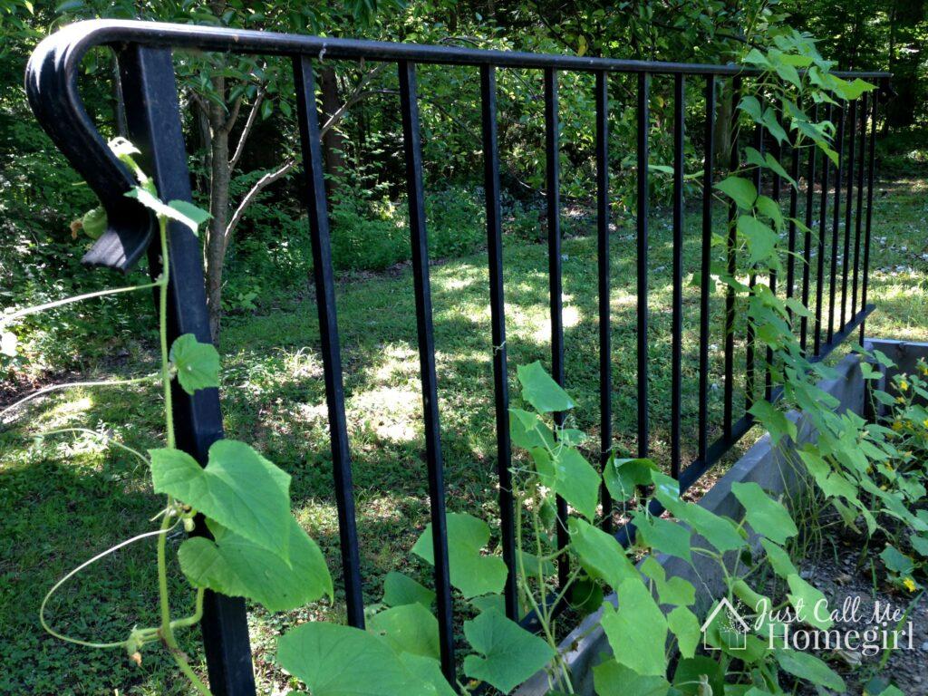garden trellis railing