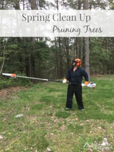 Spring Clean Up – Pruning Trees